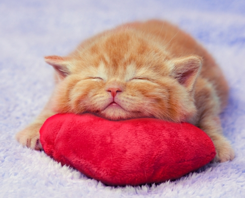 Kitten sleeping on the heart-shaped pillow