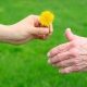 Young hand giving a dandelion to senior's hand over green background